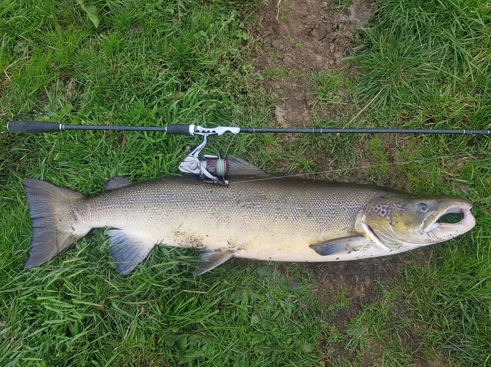 Laks på 109 cm og 10.94 kg fra Gudenåen, Østjylland -  fanget på Mepps flying c # 7335