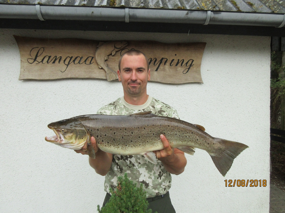 Havørred på 77 cm og 5.30 kg fra Lilleåen, Østjylland -  fanget på Vibrax # 7306