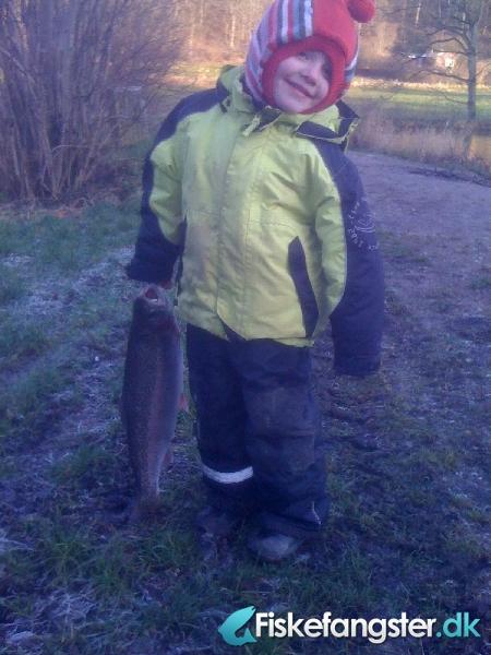 Regnbueørred på 56 cm og 2.41 kg fra pinds mølle, Østjylland -  fanget på Andet # 412