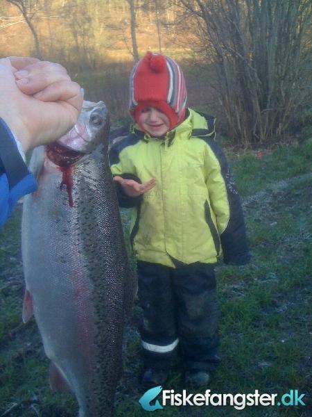 Regnbueørred på 56 cm og 2.41 kg fra pinds mølle, Østjylland -  fanget på Andet # 414
