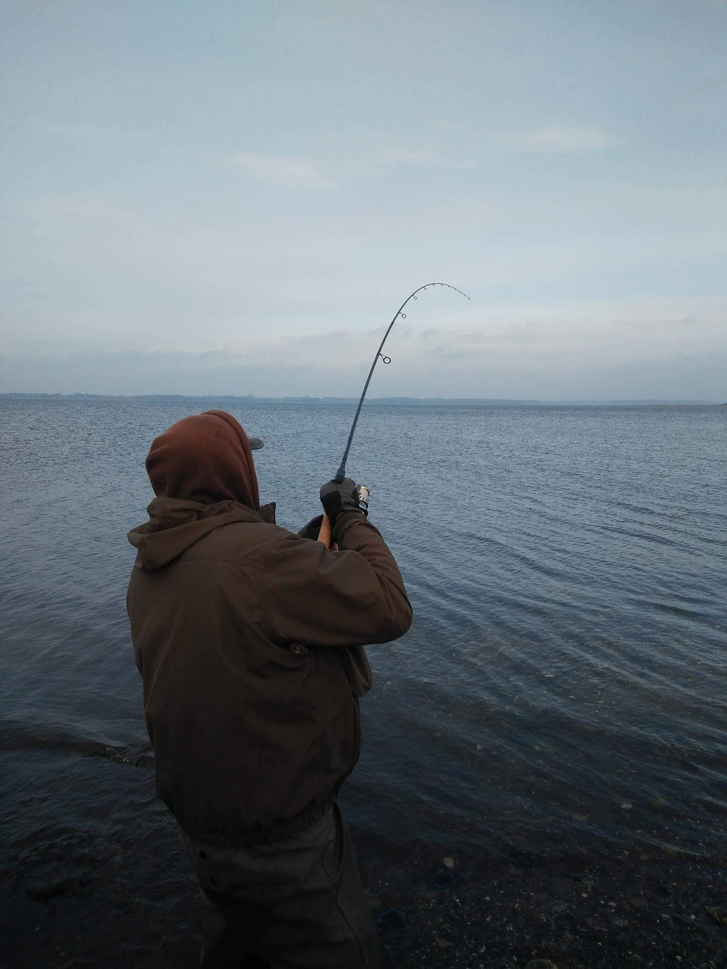 Havørred på 79 cm fra Limfjorden, Midtjylland -  fanget på Stripper # 6287