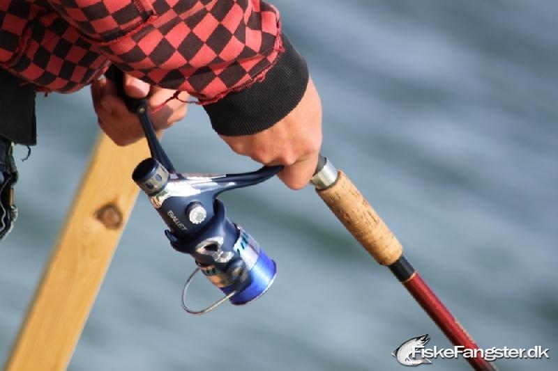 Hornfisk fra Norsminde, Østjylland -  fanget på Blink # 37