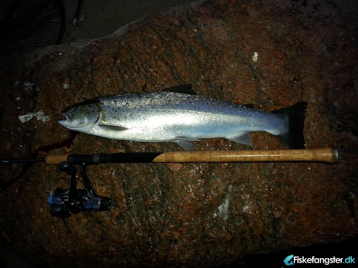 Havørred på 57 cm og 1.85 kg fra Kulhuse, Sjælland -  fanget på Blink # 3277
