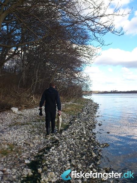 Havørred på 73 cm og 3.40 kg fra Vive havn / omegn, Nordjylland -  fanget på Blink # 645