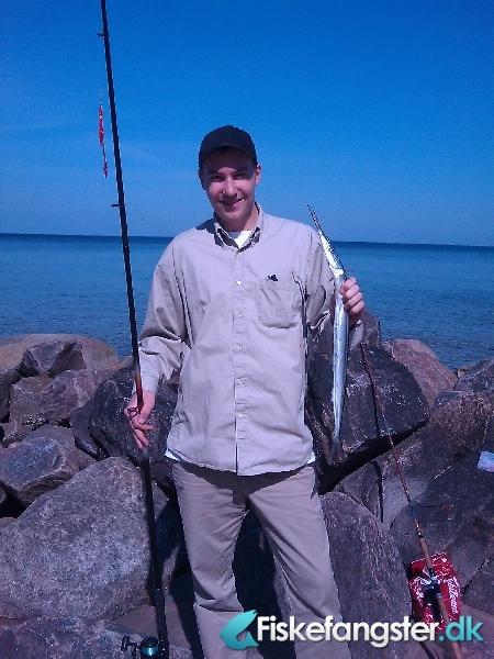 Hornfisk på 65 cm og 288 gram fra tisvilde strand, Sjælland -  fanget på Blink # 424