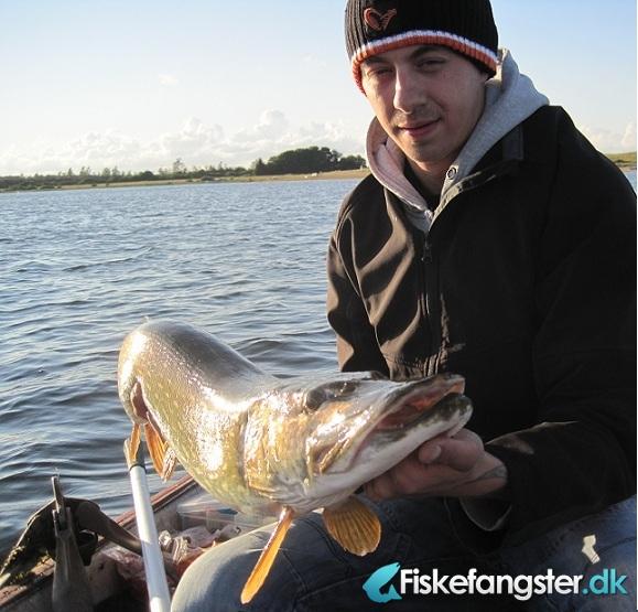 Gedde på 98 cm og 7.30 kg fra Ikke angivet, Midtjylland -  fanget på Jig # 996