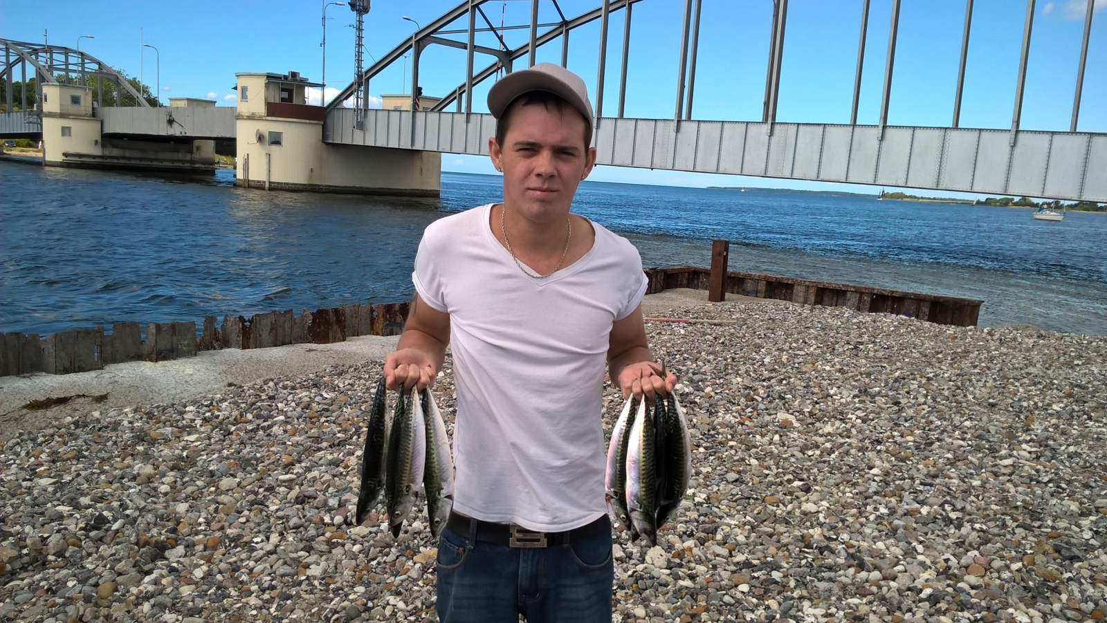 Makrel fra Guldborg, Lolland-Falster -  fanget på Sildeforfang # 6098