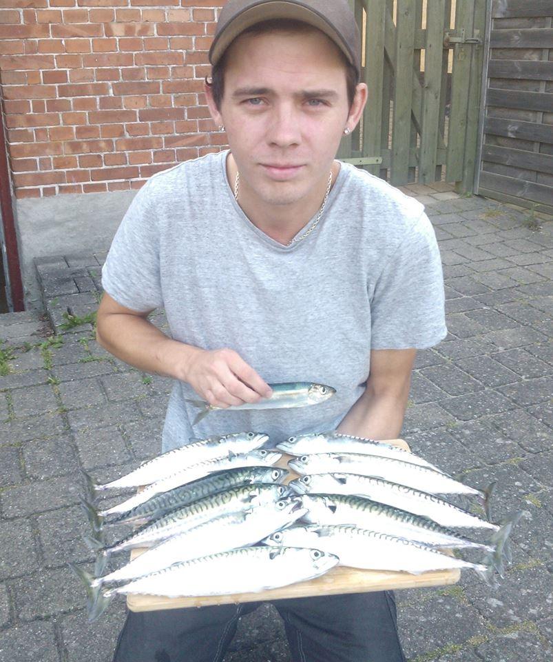 Makrel på 30 cm og 220 gram fra Guldborg, Lolland-Falster -  fanget på Sildeforfang # 4711