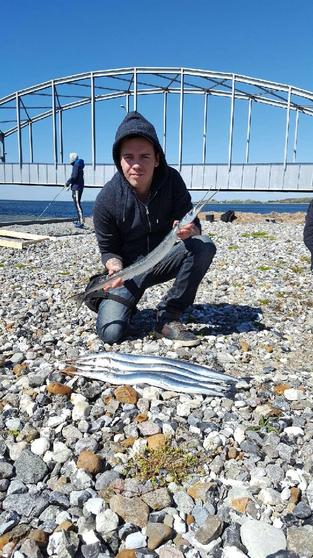 Hornfisk på 80 cm og 0.57 kg fra Guldborg, Lolland-Falster -  fanget på Møre Silda sølv/blå 22 gr # 6618