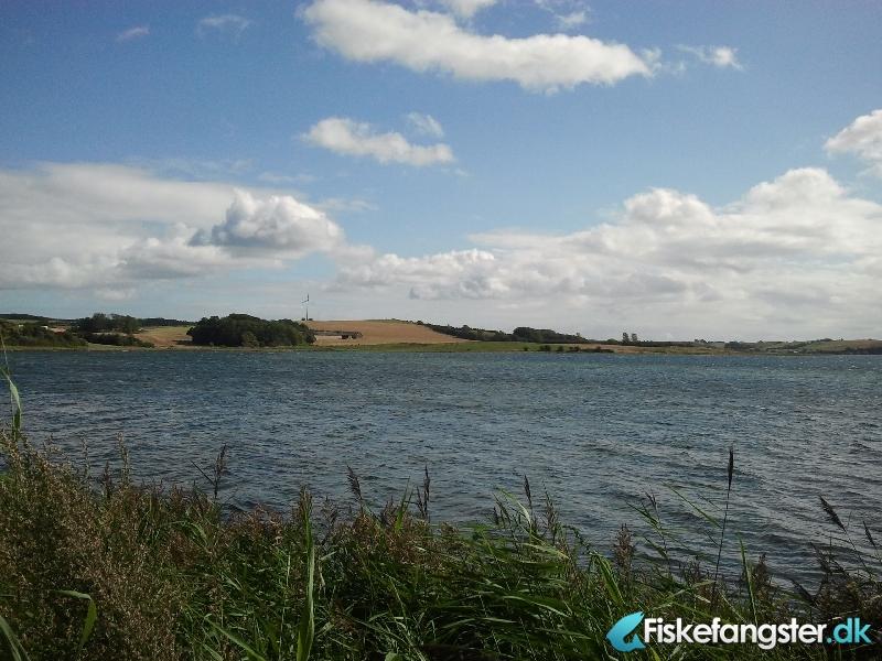 Havørred på 49 cm og 1.16 kg fra Knebel vig, Østjylland -  fanget på Kystflue # 1121