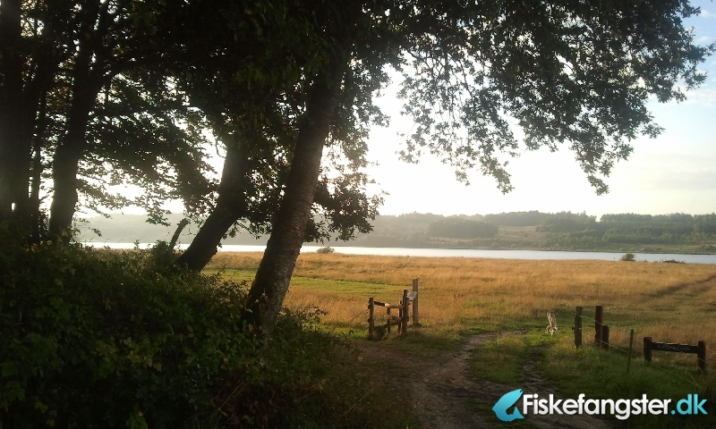 Havørred på 45 cm fra Mariager Fjord, Østjylland -  fanget på Blink # 1084