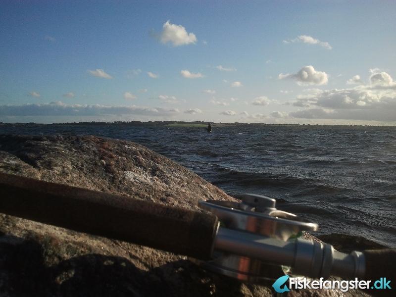 Havørred på 49 cm og 1.16 kg fra Knebel vig, Østjylland -  fanget på Kystflue # 1123