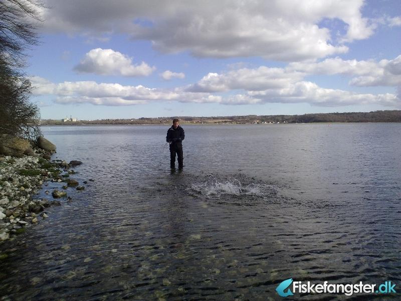 Havørred på 73 cm og 3.40 kg fra Vive havn / omegn, Nordjylland -  fanget på Blink # 644