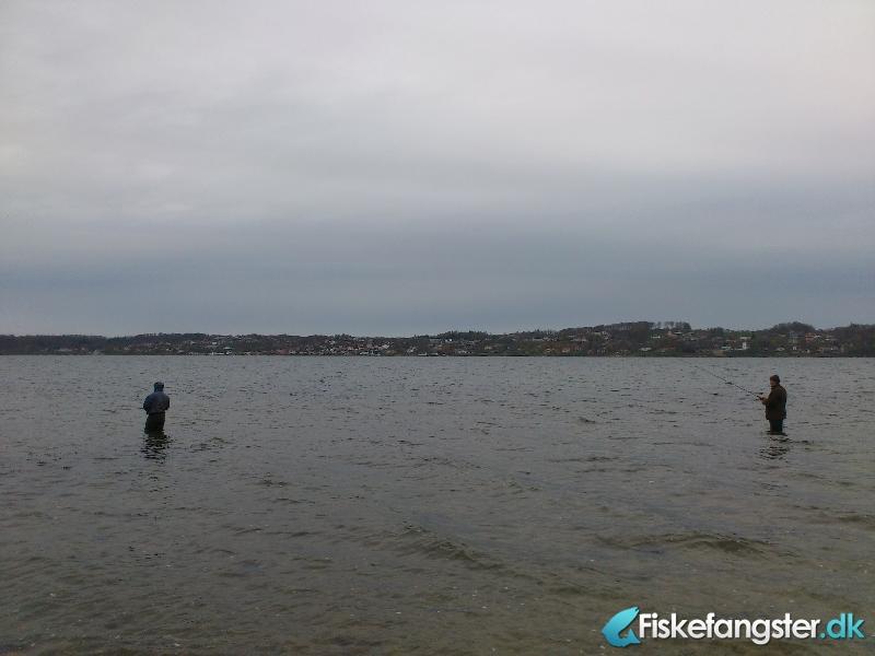 Havørred på 45 cm fra Munkebjerg, Vejle fjord, Østjylland -  fanget på Kystflue # 769