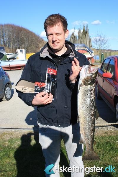 Havørred på 73 cm og 3.40 kg fra Vive havn / omegn, Nordjylland -  fanget på Blink # 647