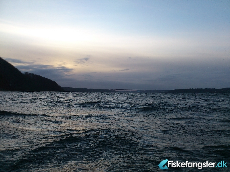 Havørred på 35 cm fra Munkebjerg, Vejle fjord, Østjylland -  fanget på Kystflue # 603