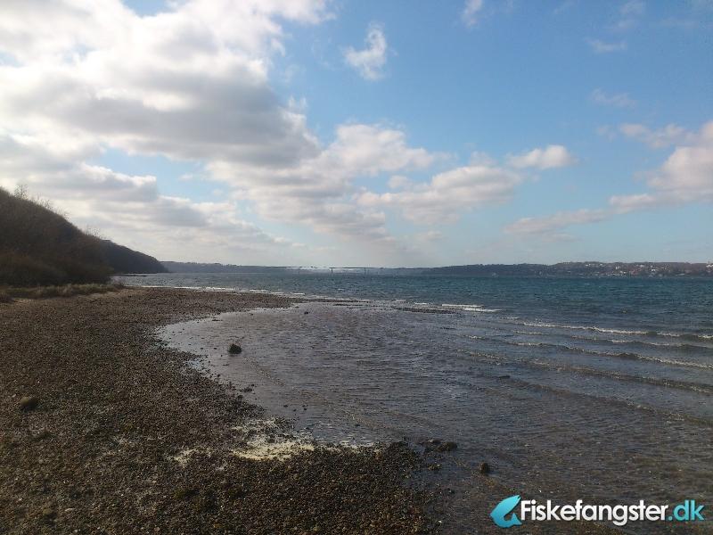 Havørred fra Saltbæk, Vejle fjord, Østjylland -  fanget på Kystflue # 606