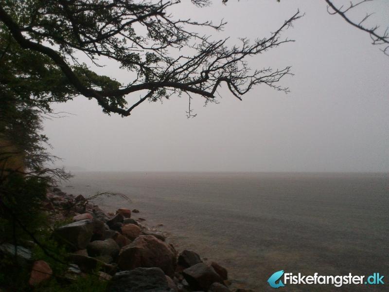 Havørred på 35 cm fra Århus bugten, Østjylland -  fanget på Bombarda # 916
