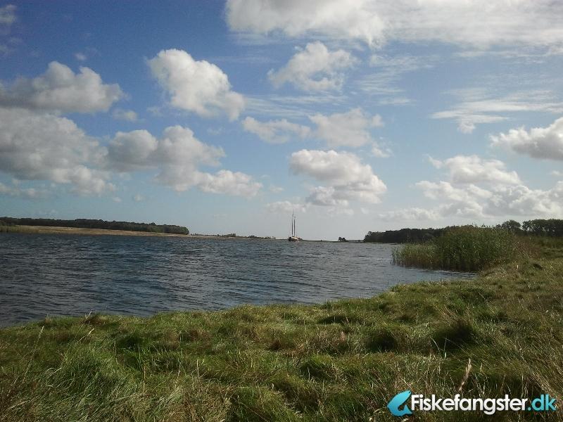 Havørred på 35 cm fra Mariager Fjord, Nordjylland -  fanget på Kystflue # 1158