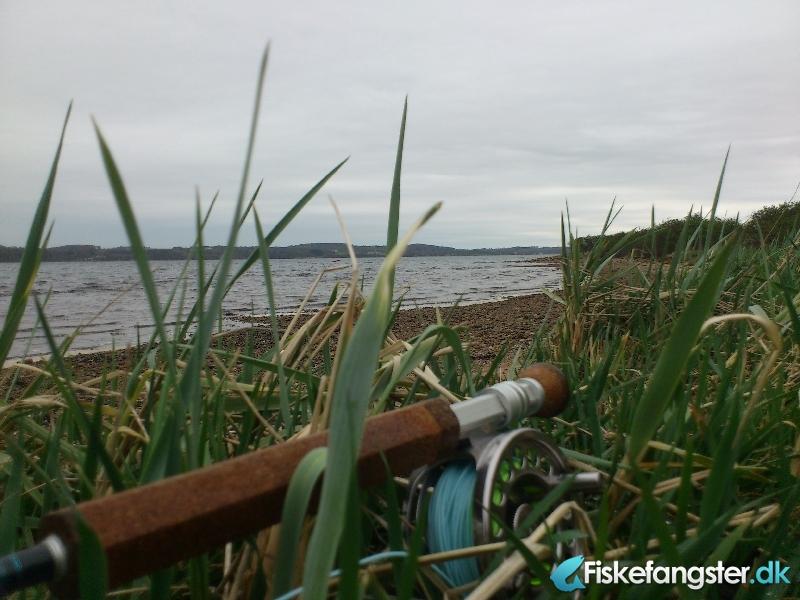 Havørred på 45 cm fra Munkebjerg, Vejle fjord, Østjylland -  fanget på Kystflue # 767