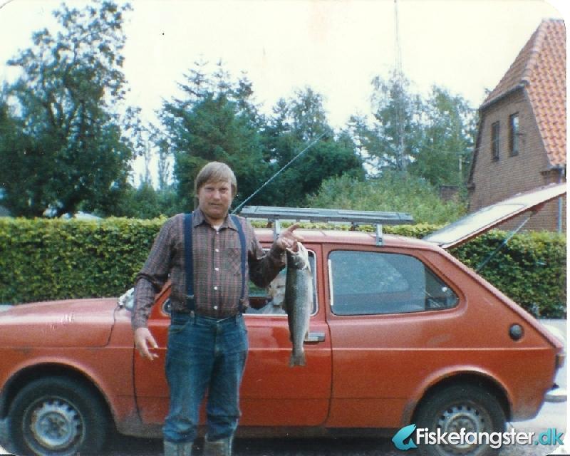 Havørred på 55 cm og 2.00 kg fra Birkemose, Lolland-Falster -  fanget på Blink # 487
