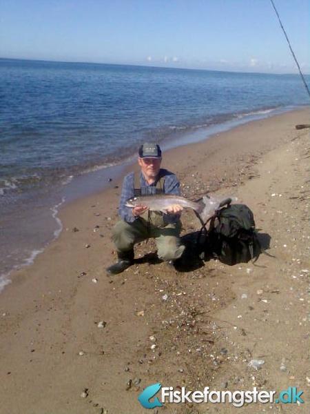 Regnbueørred på 55 cm og 2.00 kg fra Humminge, Lolland-Falster -  fanget på Blink # 491