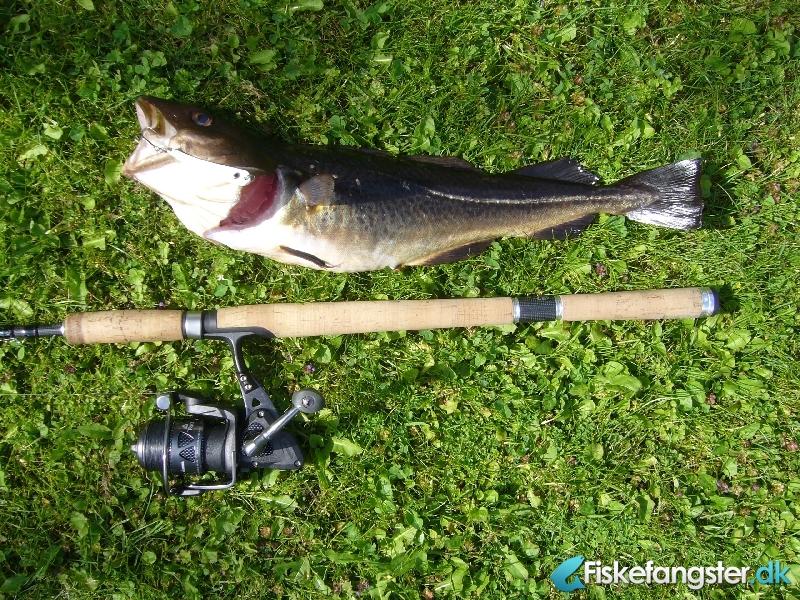 Torsk på 45 cm og 1.02 kg fra Ikke angivet, Fyn -  fanget på Blink # 1040