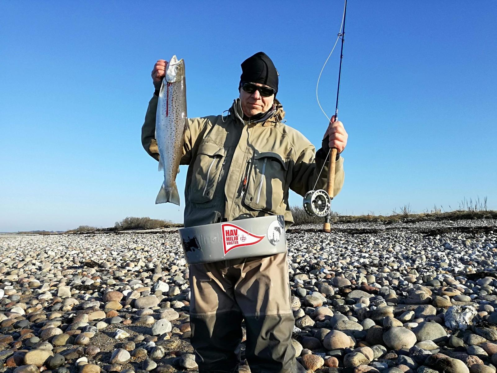 Havørred på 58 cm og 2.30 kg fra Begtrupvig, Østjylland -  fanget på Kystflue # 7202
