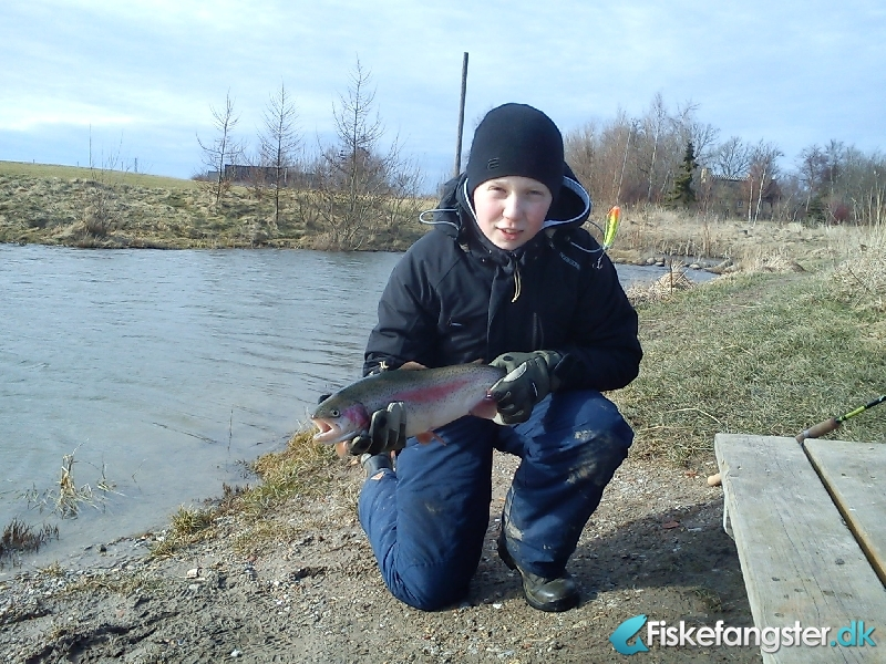 Regnbueørred på 57 cm og 1.55 kg fra Ørsted Fisk og Golf, Sjælland -  fanget på Wobler # 556