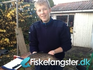 Bækørred på 43 cm og 0.88 kg fra simons put and take, Sjælland -  fanget på Blink # 1413