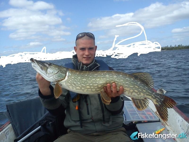 Gedde på 100 cm og 5.50 kg fra lokal sø, Midtjylland -  fanget på Wobler # 959