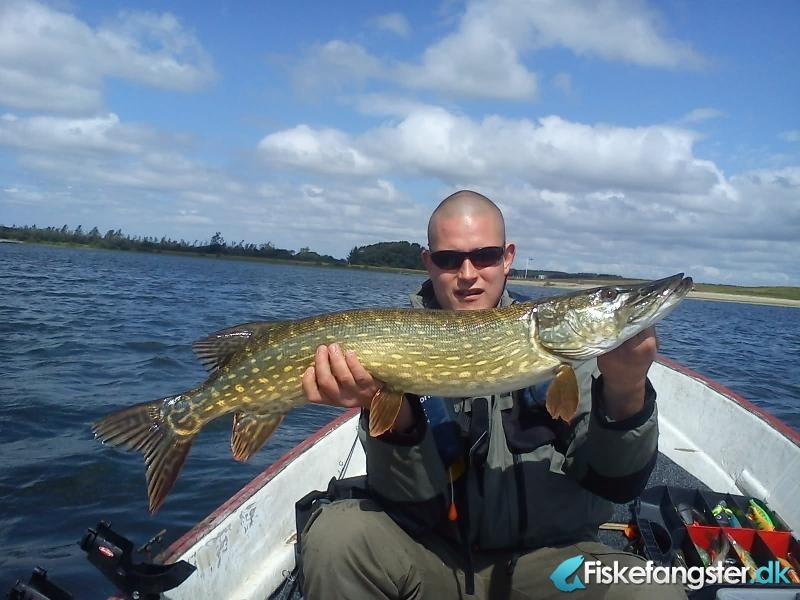 Gedde på 95 cm og 5.00 kg fra lokal sø, Midtjylland -  fanget på Wobler # 958
