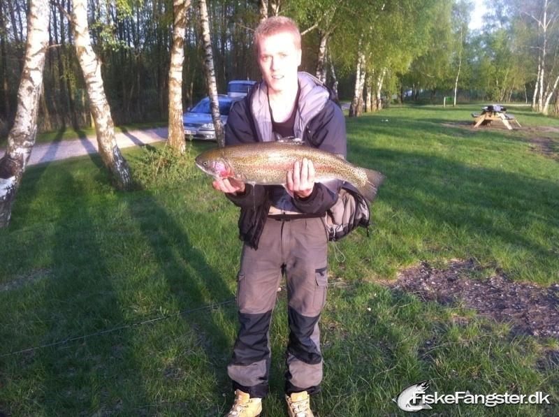 Regnbueørred på 62 cm og 3.50 kg fra Moesholm p&t, Andet -  fanget på Andet # 40