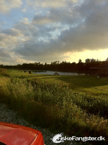 Regnbueørred fra Purhus fiskepark, Østjylland -  fanget på Nymfeflue # 115