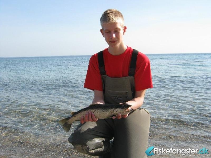 Havørred på 47 cm og 1.00 kg fra fuglsø, Midtjylland -  fanget på Kystflue # 663