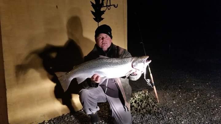 Havørred på 85 cm og 8.05 kg fra Århus bugten, Østjylland -  fanget på Wobler # 3925