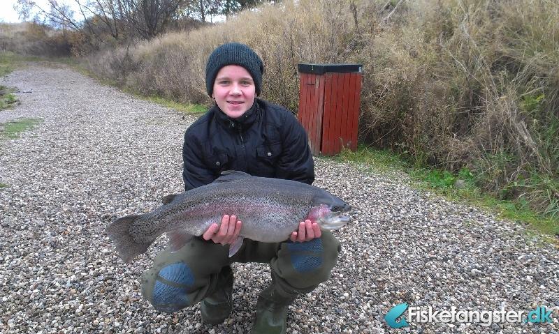Regnbueørred på 64 cm og 5.50 kg fra Simons put and take, Sjælland -  fanget på Blink # 1435