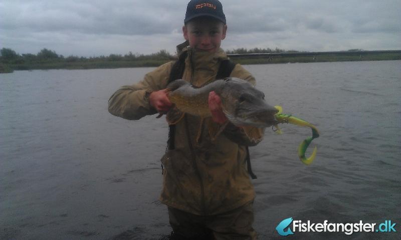 Gedde på 82 cm og 4.55 kg fra lokalt vand, Vestjylland -  fanget på Andet # 928