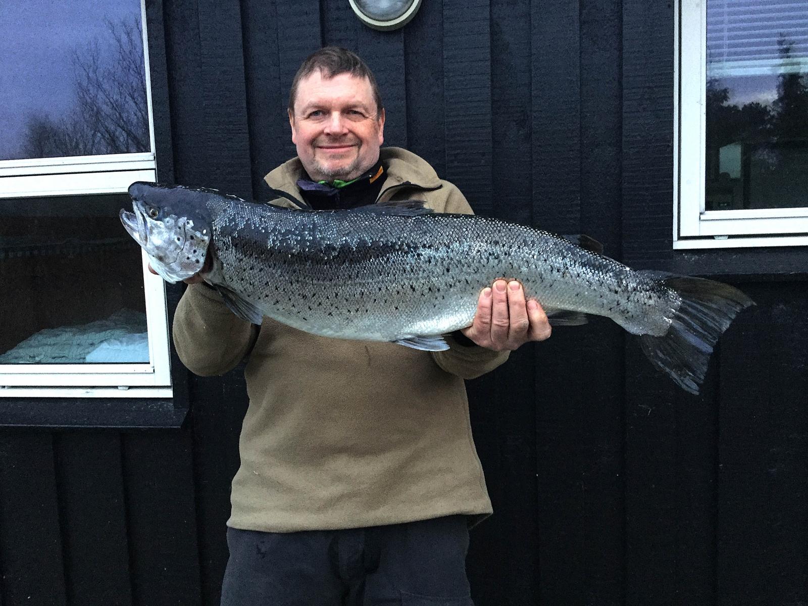 Havørred på 82 cm og 7.50 kg fra Djursland, Østjylland -  fanget på Pattegrisen # 5498