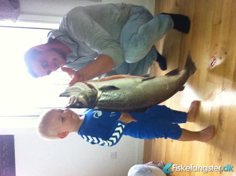Havørred på 77 cm og 5.20 kg fra Nordjylland -  fanget på Rørflue # 1102
