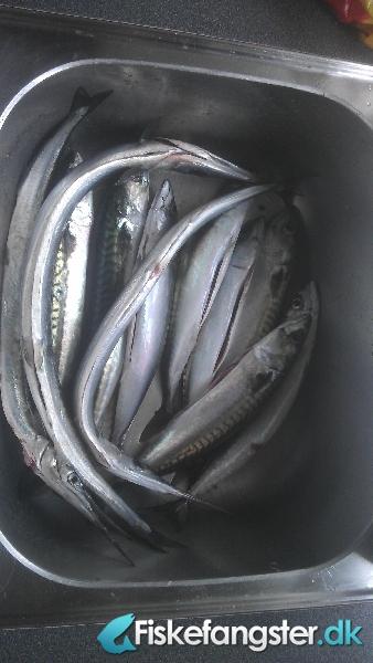 Makrel på 39 cm og 400 gram fra Assens havn, Fyn -  fanget på Flåd # 1070