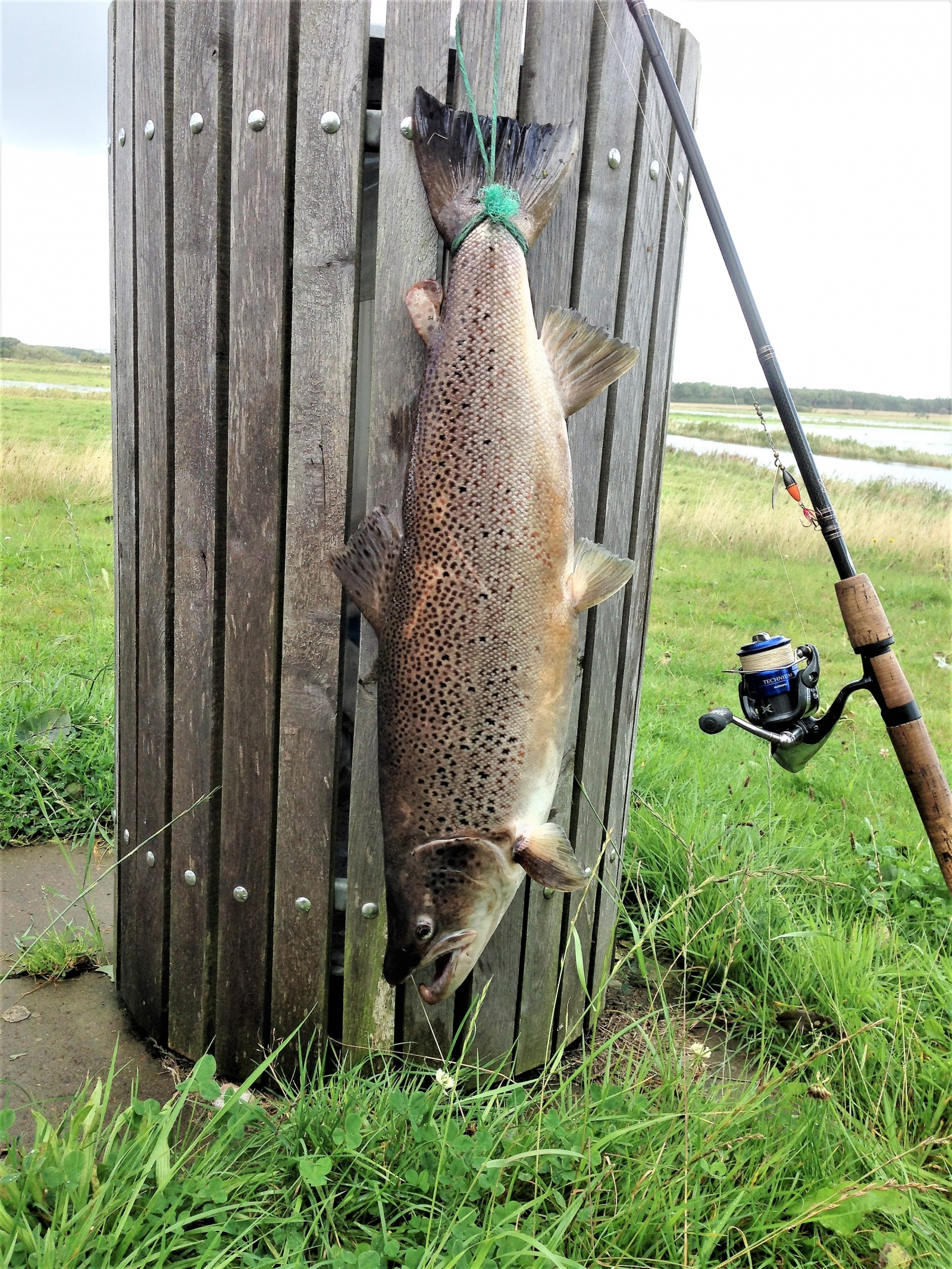Havørred på 75 cm og 5.20 kg fra Sneum å, Vestjylland -  fanget på Spinner # 6861