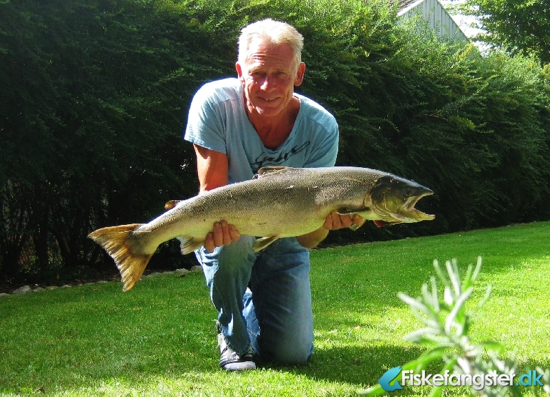 Laks på 94 cm og 7.50 kg fra Sneum å, Vestjylland -  fanget på Wobler # 1104