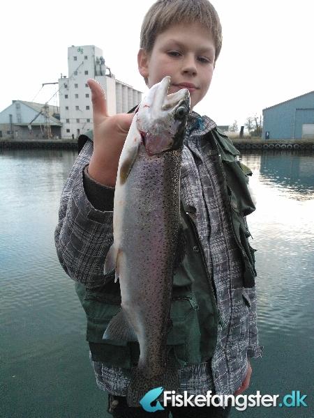 Regnbueørred på 45 cm og 0.95 kg fra Nakskov Havn, Lolland-Falster -  fanget på Jig # 1379