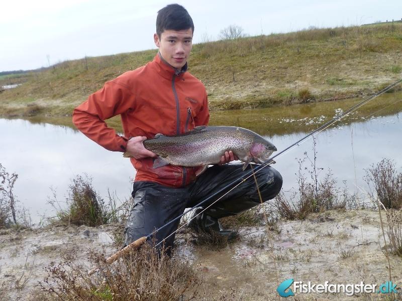 Regnbueørred på 70 cm og 5.80 kg fra Højrupgaard P&T, Fyn -  fanget på Vådflue # 1439