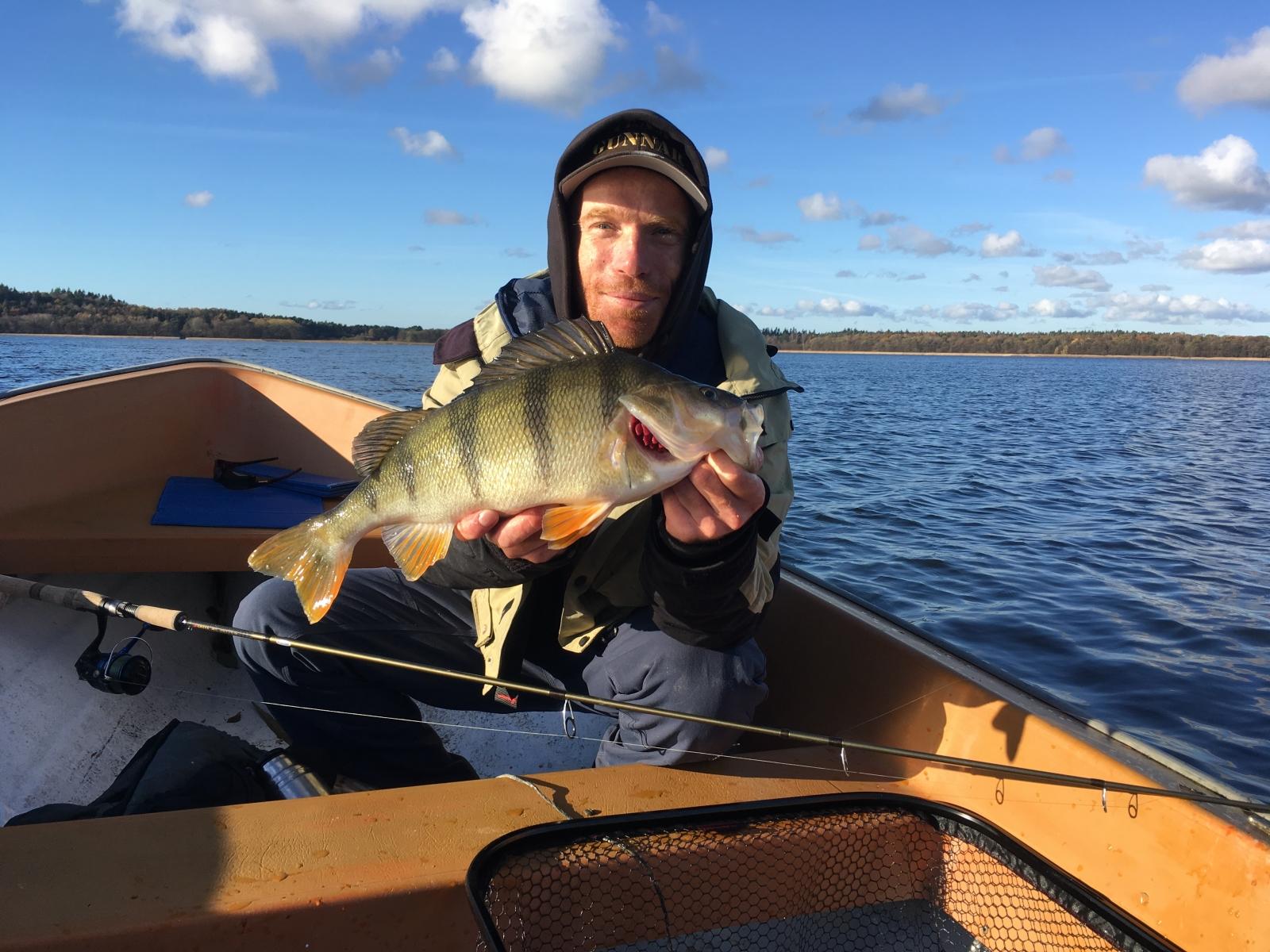 Aborre på 1.50 kg fra Privat sø, Østjylland -  fanget på Wobler # 7027