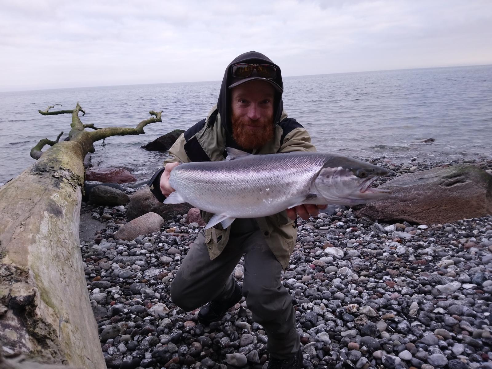 Havørred på 71 cm og 4.30 kg fra Djurslands yderkyst, Østjylland -  fanget på Bo Jensens Diller (hjemmelavet tobisvobler) # 7207