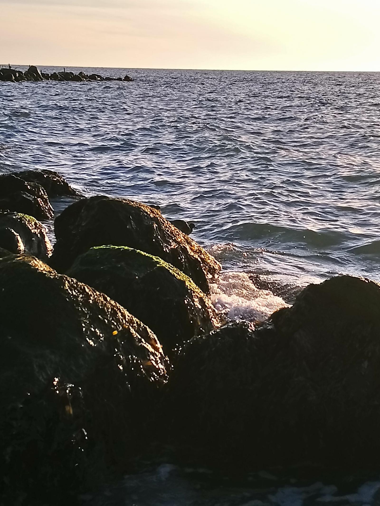 Havørred på 44 cm fra Aarhusbugten, Østjylland -  fanget på LT Sandål # 7131