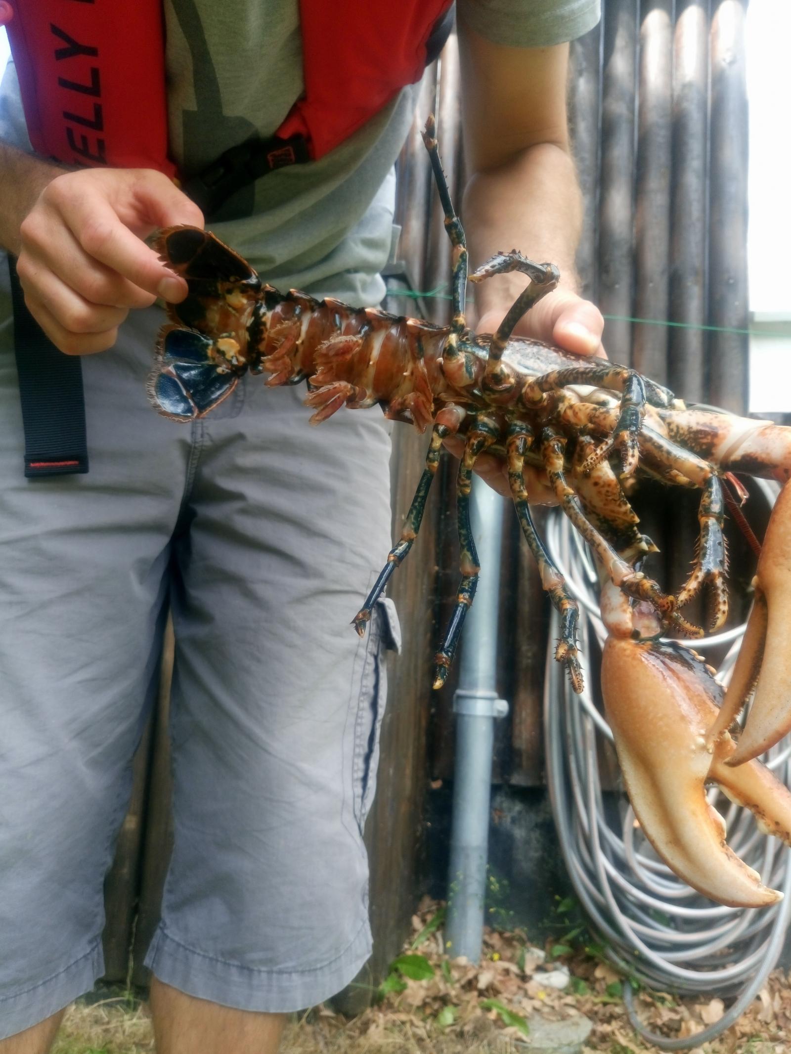 Anden art på 32 cm og 1.10 kg fra Djursland, Østjylland -  fanget på Powerbait # 6809