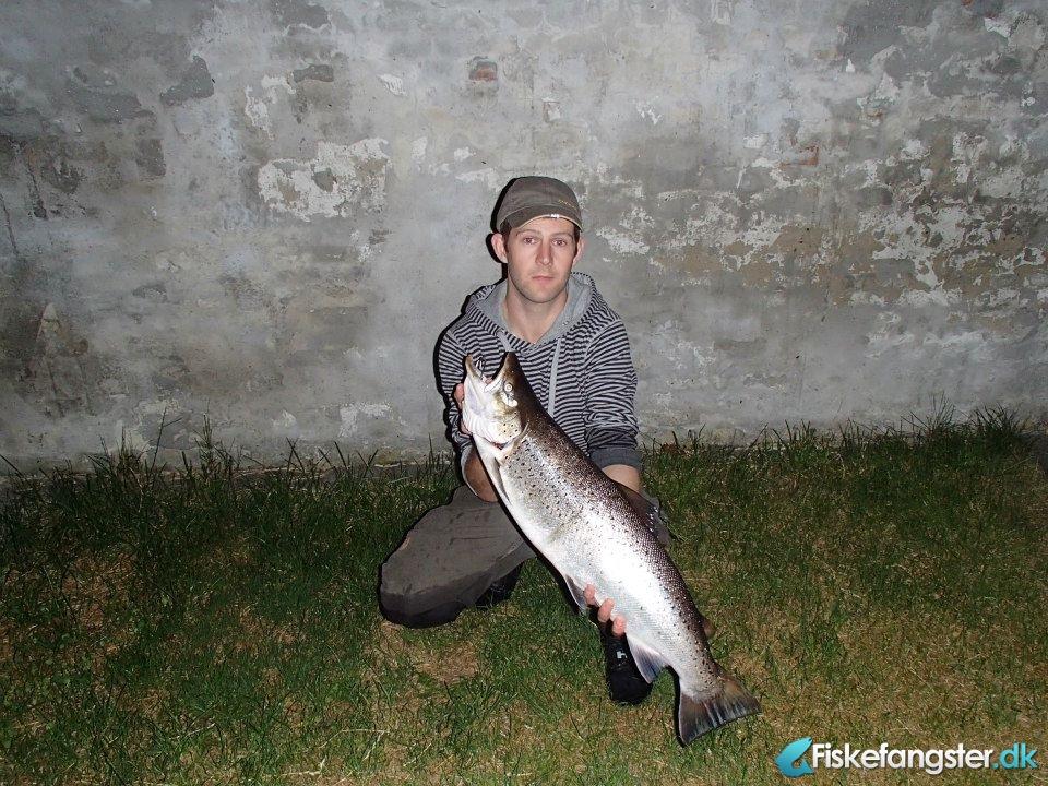 Havørred på 77 cm og 6.22 kg fra Den lokale å, Sønderjylland -  fanget på Rørflue # 2088